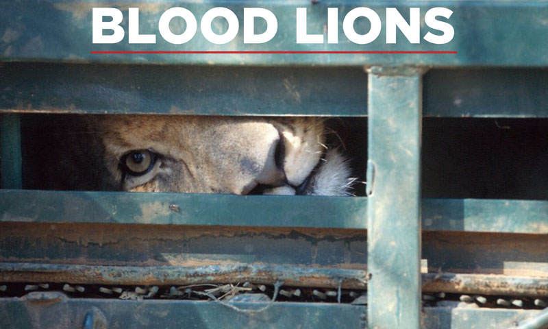 blood lions, winner, 2017 african responsible tourism awards, best responsible tourism campaign